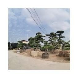 龙海市九湖兴景园艺场