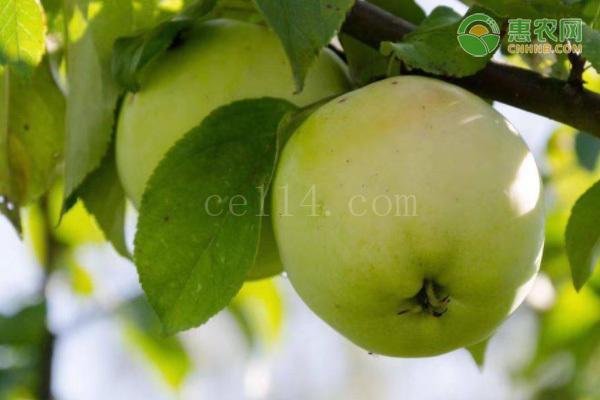 青苹果有哪些优良品种?