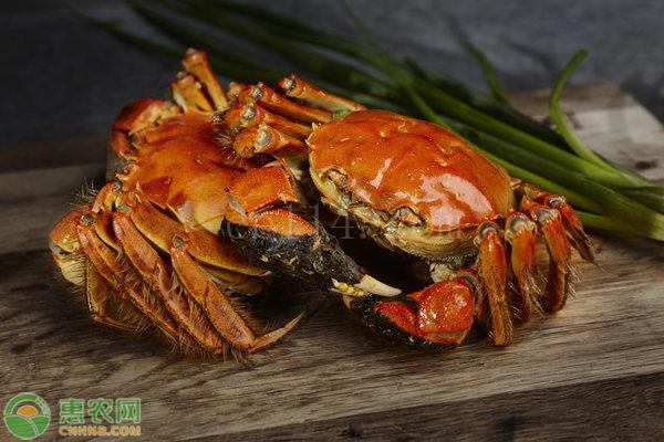 大闸蟹与河蟹有什么区别?