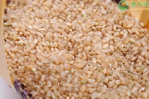 糙米和精米有什么区别?