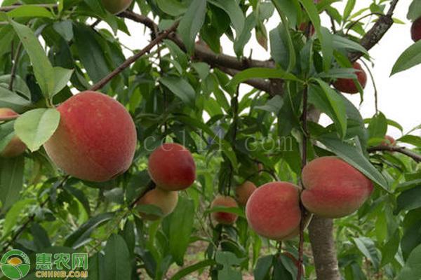 夏天水果怎么保存才新鲜?教你几个小妙招!