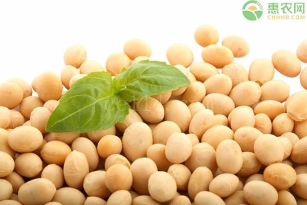 大豆有哪些优质品种?