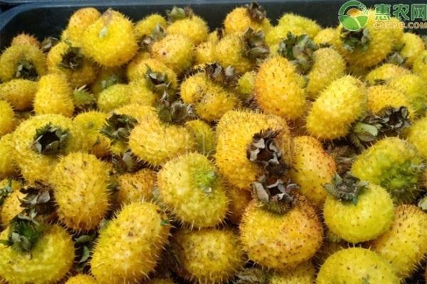 刺梨和沙棘哪个营养好?