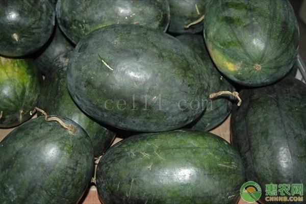 如何挑选优质西瓜?