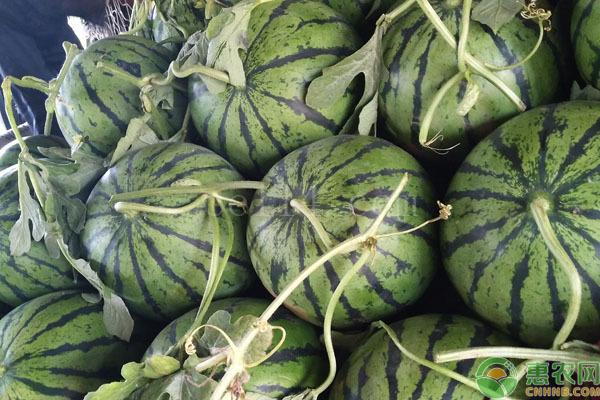 晚熟西瓜有什么品种?