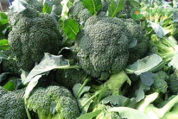 青花菜种植什么品种好?