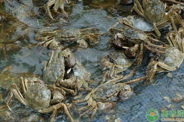 如何区分公蟹母蟹?