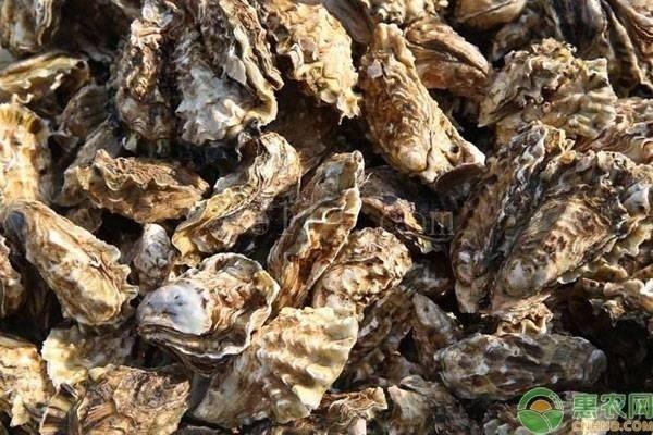 海阳牡蛎产地在哪?
