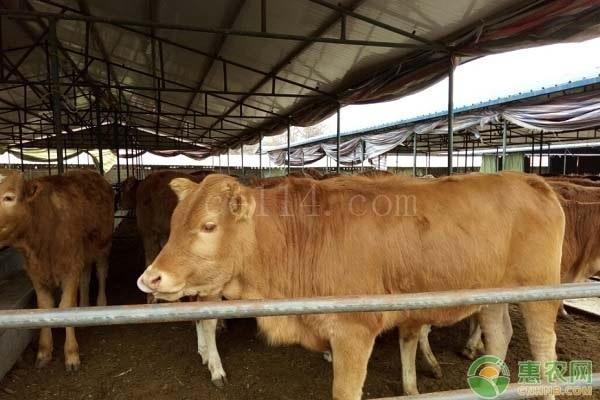 农牛是什么意思?