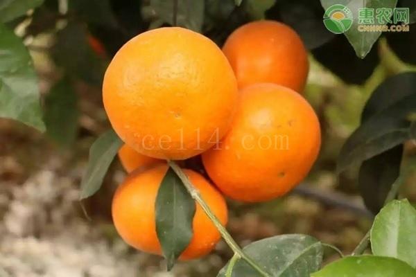 甜度高的柑橘有哪些?