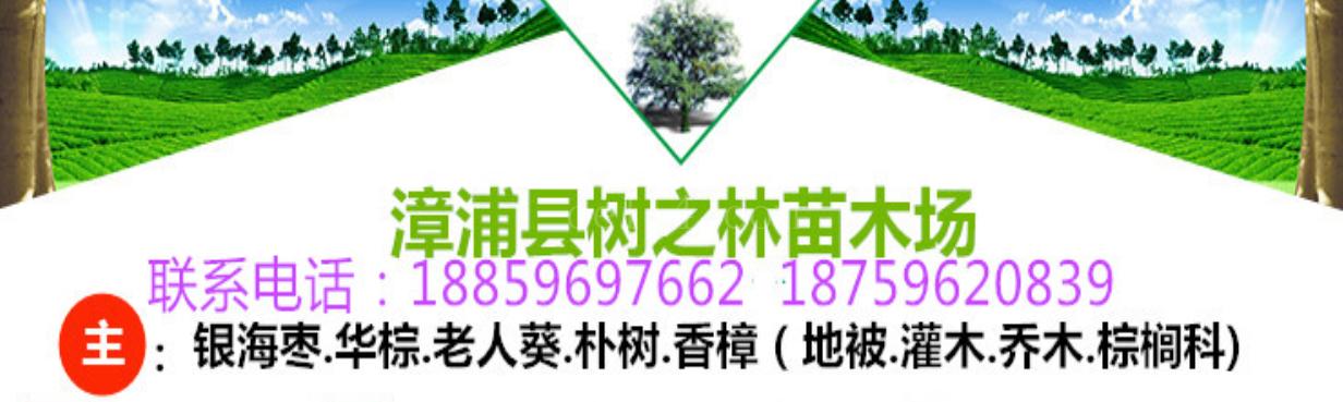 公司简介-漳浦县树之林苗木场