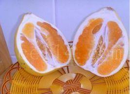 平和黄心蜜柚嫁接枝条