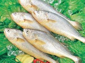 宇杰冰鲜大黄鱼 肉质细嫩 食后留香