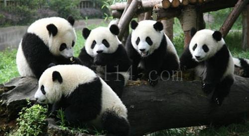 成都九寨熊猫乐园六日游
