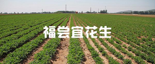 公司簡介-龍巖市福嘗宜花生食品廠