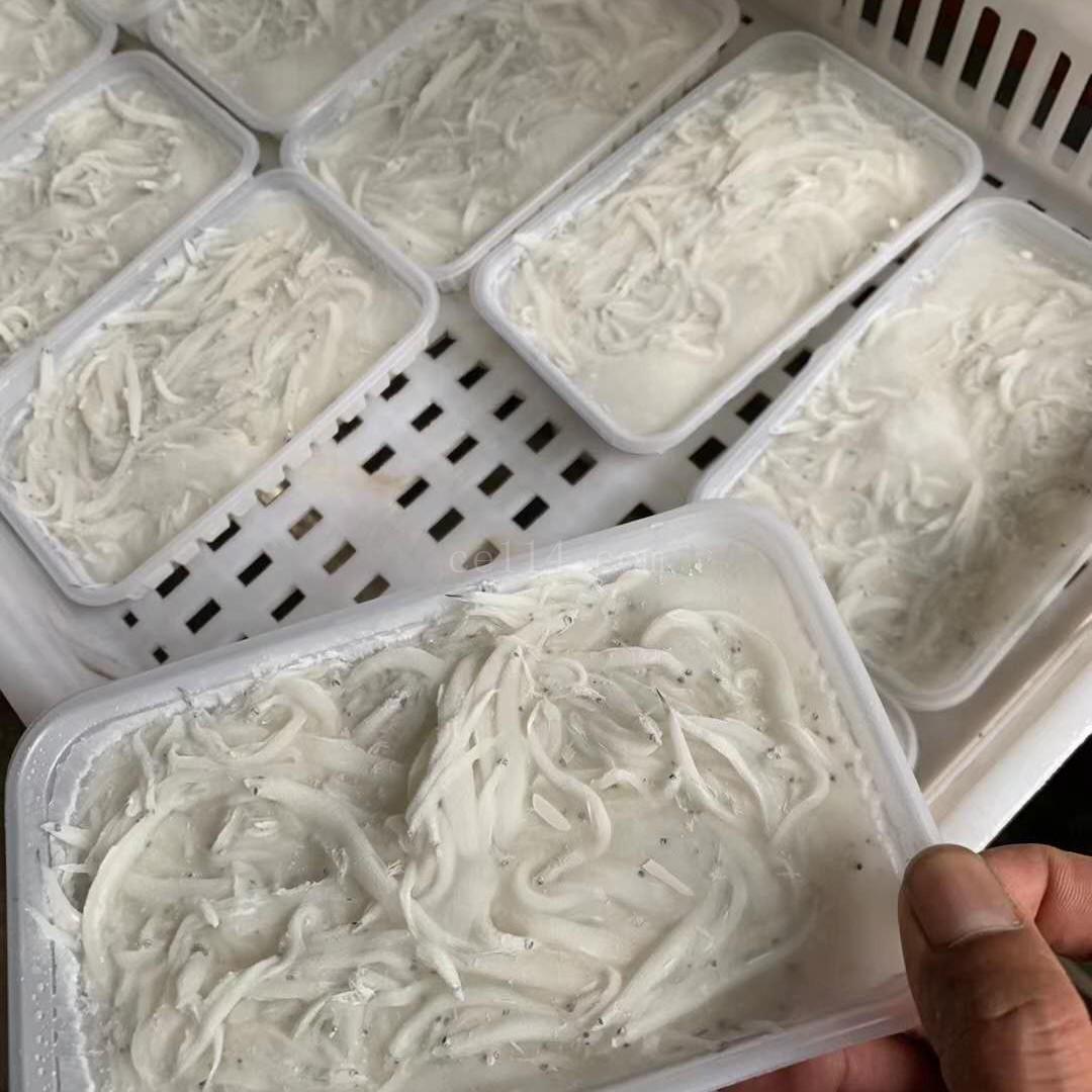漳州盒装新鲜小银鱼