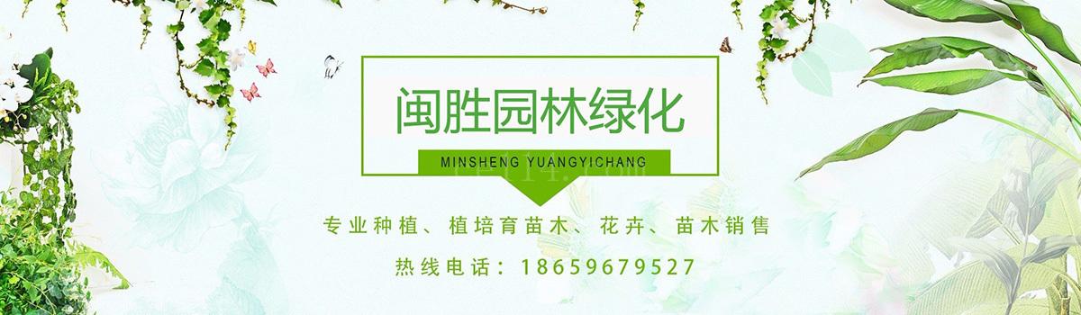 公司简介-漳州市闽胜园林绿化工程有限公司
