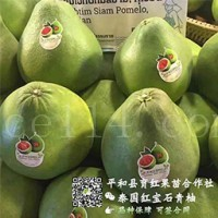 福建省平和县育红蜜柚种苗有限公司