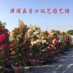 漳浦县马口双艺园艺场