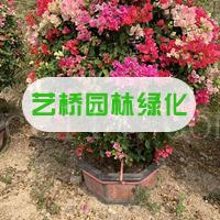 漳州艺桥园林绿化工程有限公司