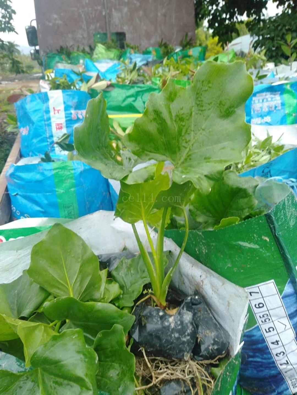 福建立成园林绿化工程有限公司