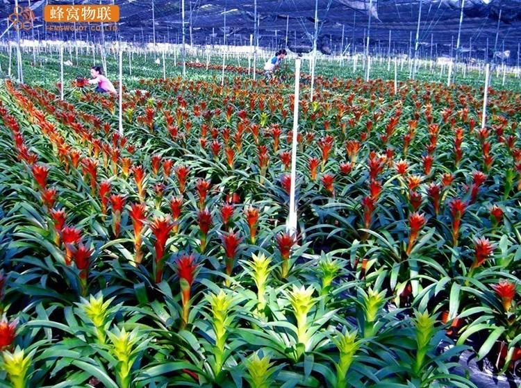 泉州蜂窝物联 花卉种植温室大棚