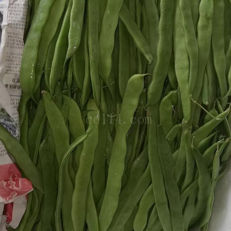 (泉州农副产品配送)油豆角