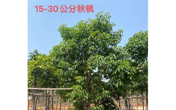 漳州苗木供应商供应
