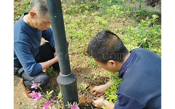 龙岩园林绿化