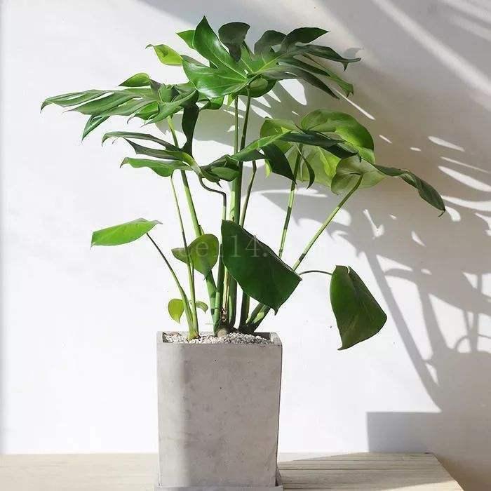 龙岩除甲醛植物有哪些?放这几种植物,网友直呼:太有用了
