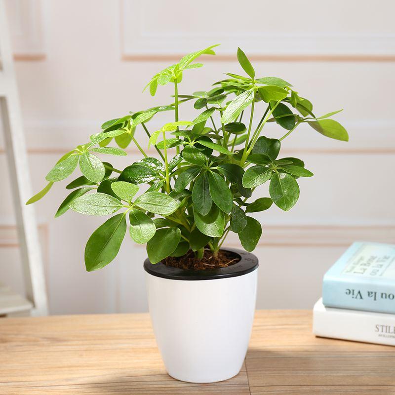 除甲醛植物有哪些?放这几种植物,网友直呼:太有用了