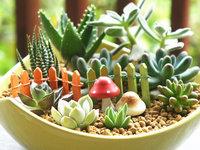 多肉植物种植方法,掌握这3个方法,新手也能变大神!