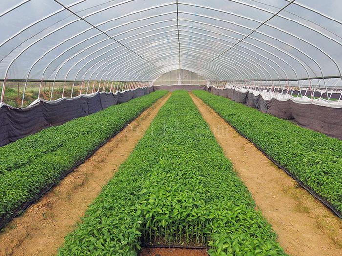 龙岩大棚蔬菜种植的优势与特色