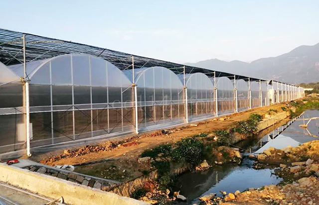 龙岩温室大棚蔬菜管理要点