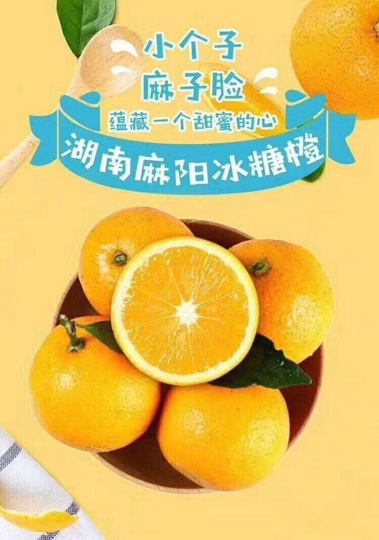 麻阳冰糖橙的价格